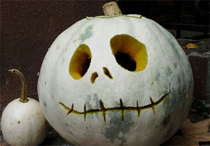 Picture of novelty carved albino pumpkin face