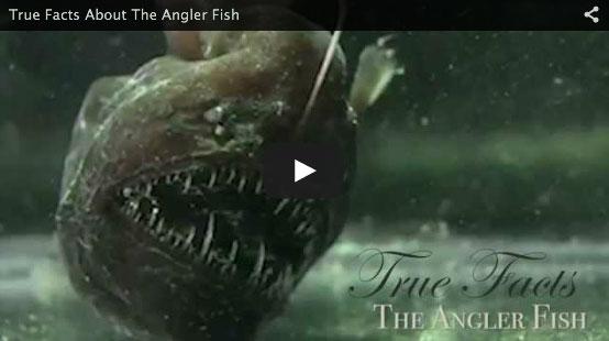 anglerfishfacts
