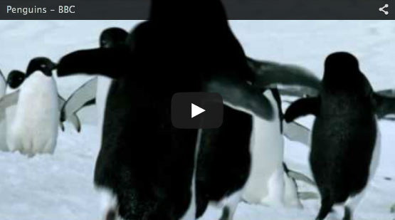 flyingpenguins