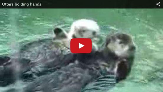 ottersholdinghands