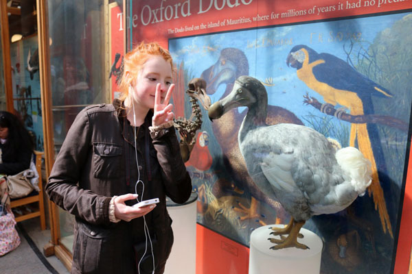 Image of dodo bird at Oxford Natural History Museum