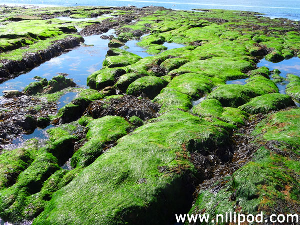 Photo of rock pools at Exmouth
