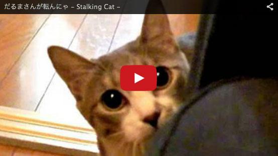 stalkingcat