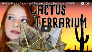 Planting a cactus terrarium