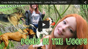 Dogs Running Around in the Woods - Lethal Doges